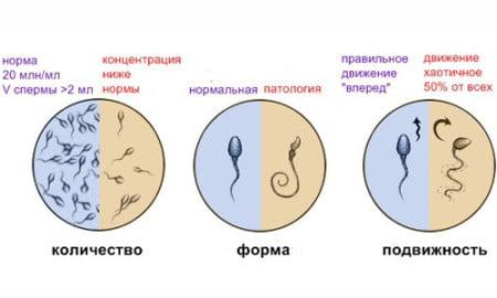 Сделать сперму жиже